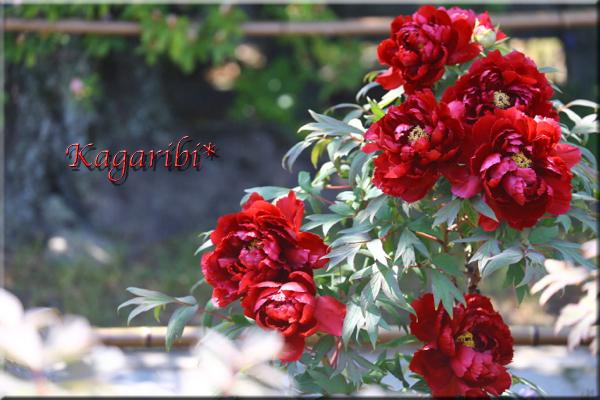 flower80f.jpg