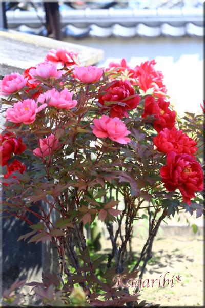 flower80g.jpg