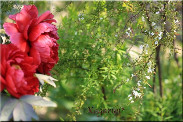 flower81a.jpg