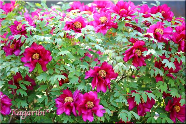 flower81b.jpg