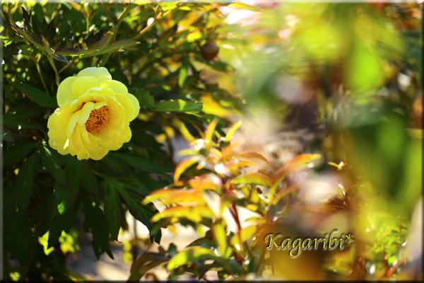 flower81c.jpg