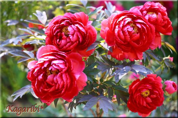 flower81d.jpg