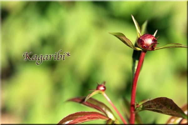 flower81e.jpg