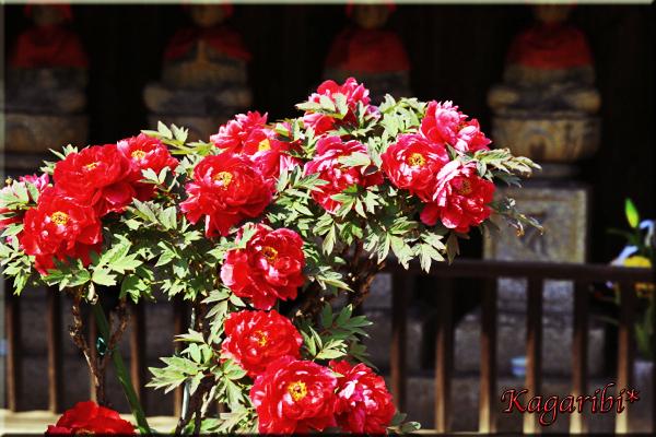 flower81f.jpg