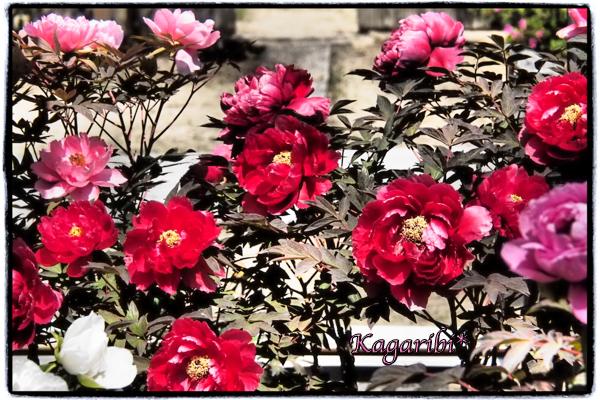 flower82b.jpg