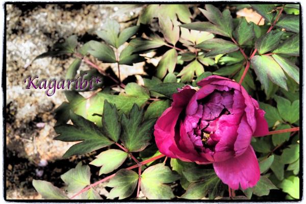 flower82c.jpg