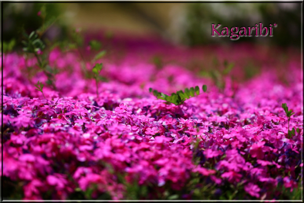 flower85.jpg