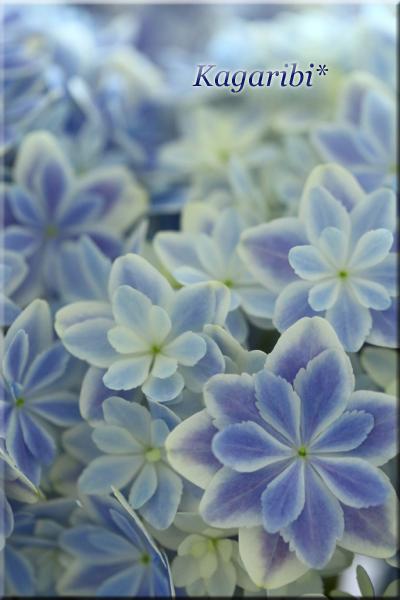 flower86a.jpg