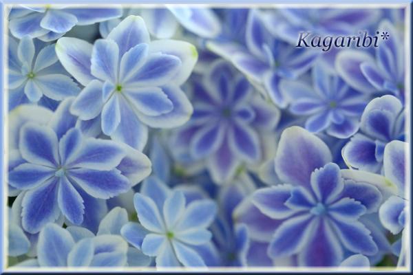flower86b.jpg