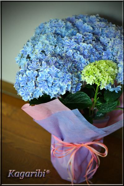 flower86c.jpg