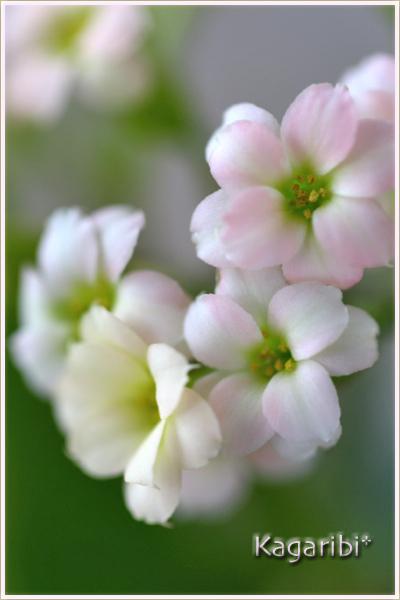 flower87b.jpg