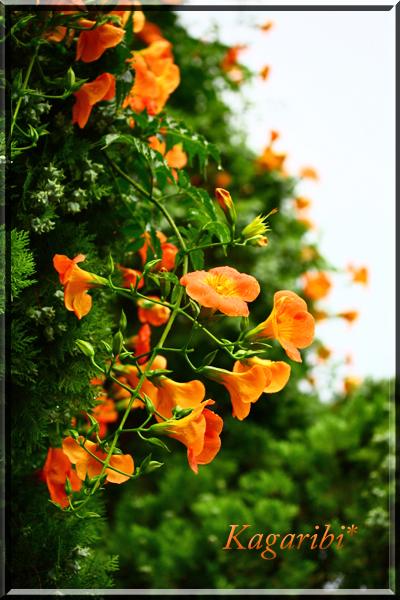 flower89a.jpg