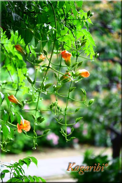 flower89b.jpg