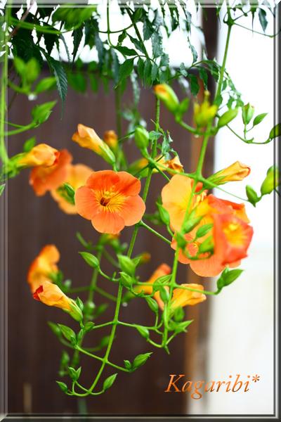 flower89c.jpg