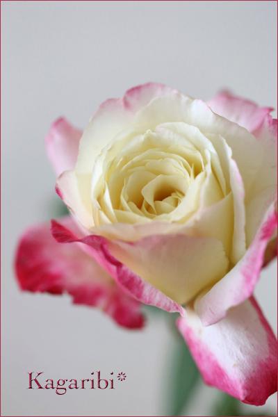 flower91a.jpg