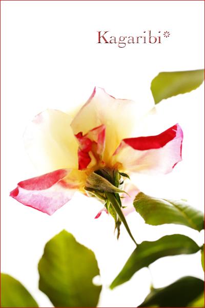 flower91b.jpg