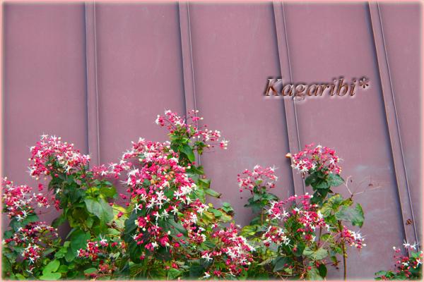 flower92a.jpg