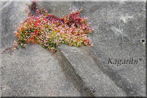 flower92c.jpg
