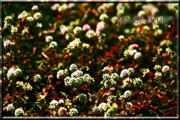 flower95a.jpg