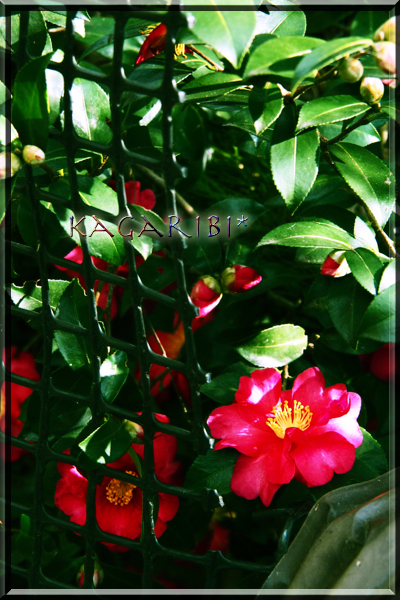 flower95b.jpg