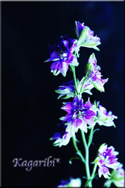 flower96b.jpg
