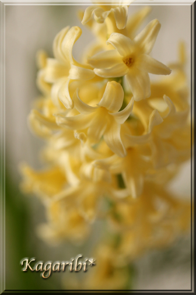flower96c.jpg