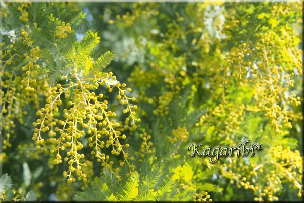 flower97a.jpg