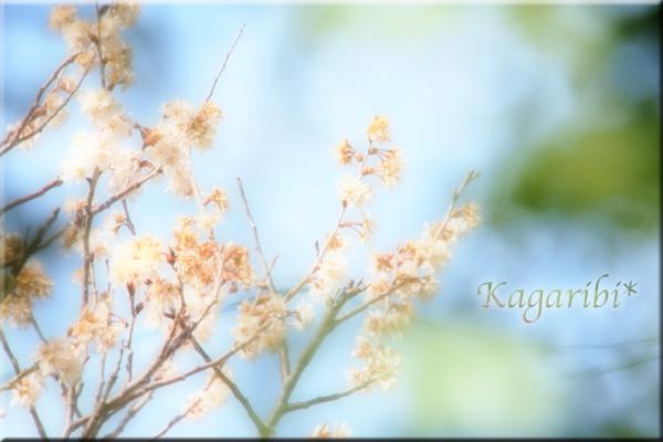 flower97c.jpg