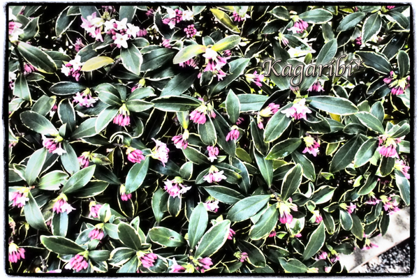 flower97d.jpg