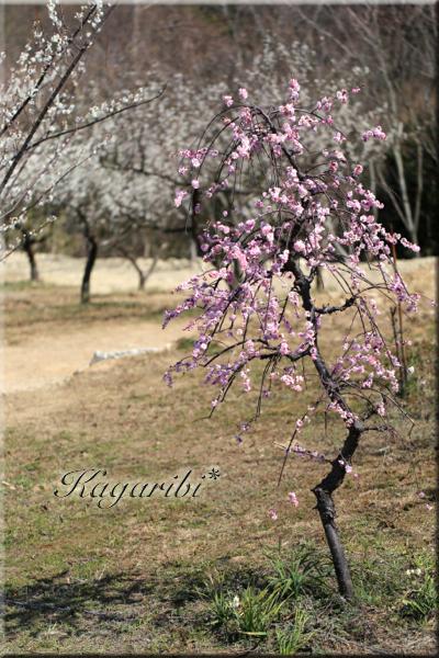 flower98b.jpg