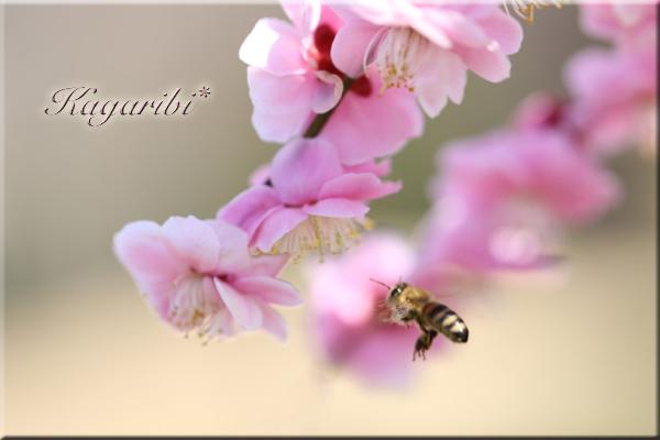 flower98c.jpg