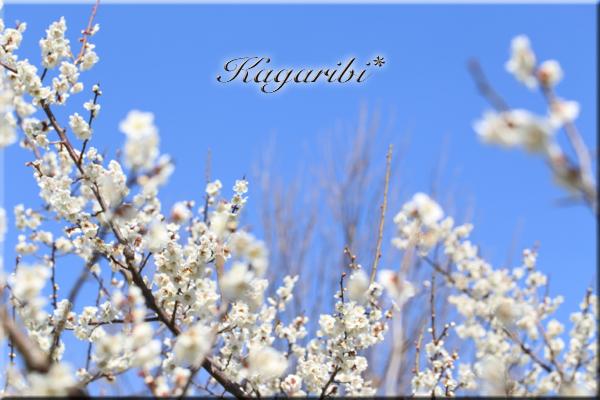 flower98d.jpg