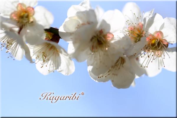 flower98e.jpg