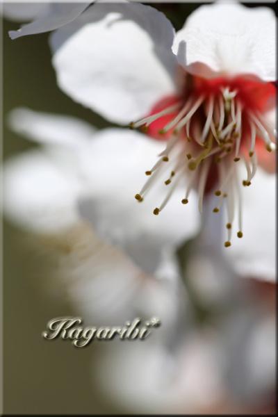 flower98f.jpg