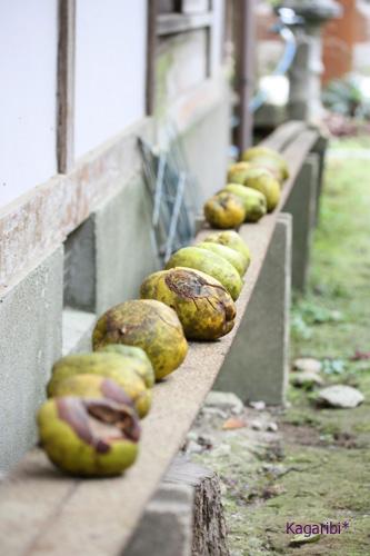 fruits4b.jpg