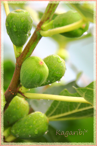 fruits9b.jpg