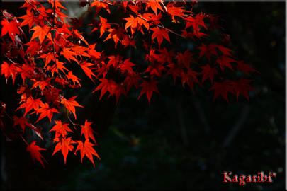 k-san1a.jpg