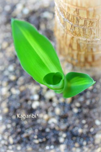 leaf11a.jpg