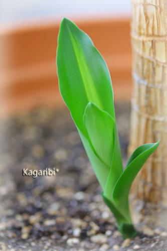 leaf11b.jpg