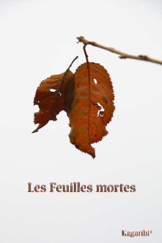 leaf12a.jpg