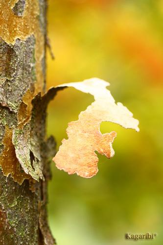 leaf12b.jpg