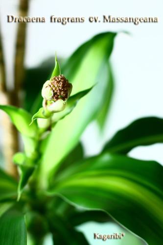 leaf13a.jpg
