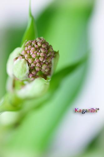 leaf13b.jpg