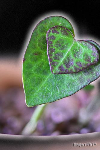 leaf14c.jpg