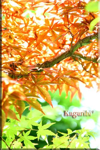 leaf16a.jpg