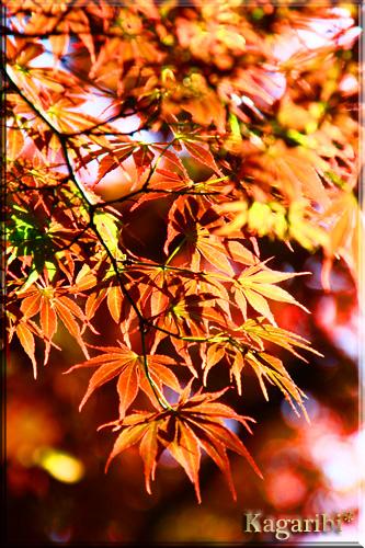 leaf16b.jpg