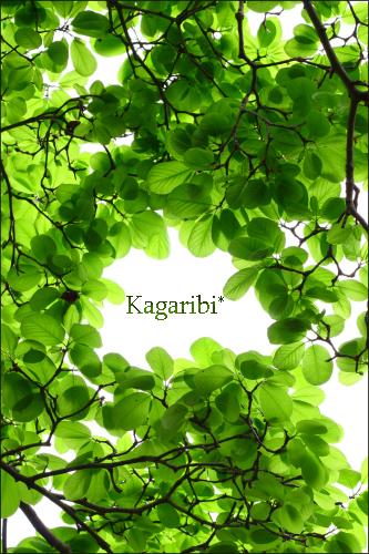 leaf20a.jpg