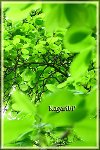 leaf20b.jpg