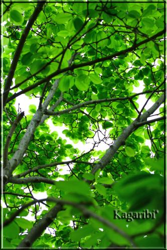leaf20c.jpg