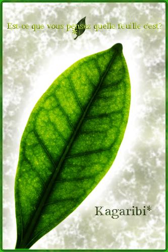 leaf21a.jpg